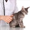 Ветеринарные клиники в Себеже